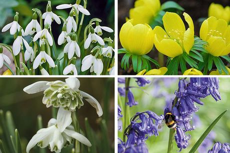 £9.99 for a pack of 40 spring bulbs in the green from Thompson & Morgan!