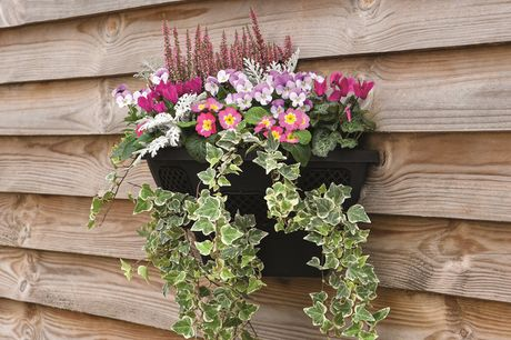 £10.99 instead of £24.99 for one plastic wall basket planter, £16.99 for two or £28.99 for four from Thompson & Morgan - save up to 56%