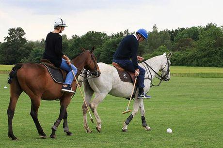 Nyhed: Introduktion til polo for 2 personer Du kan nu komme helt tæt på den historiske hestesport - året rundt. Som noget helt nyt på Sweetdeal har du nu muligheden for at få fingrene i en eksklusiv privat polo-oplevelse for 2 personer. Se, om du har, hva