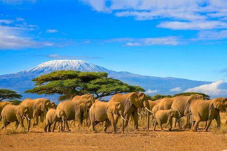 Tanzania Kilimanjaro - Safari + Sea Cliff Resort & Spa 5* a partire da € 1.546,00. La Tanzania tra safari nella natura e relax sul mare a 5*