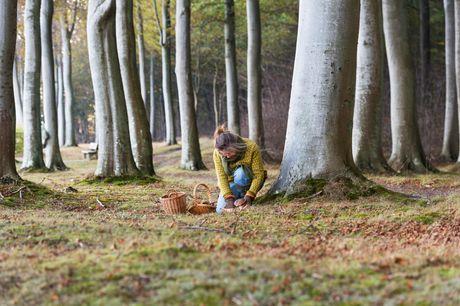 Ta' med på svampejagt og sankning af urter i de nordsjællandske skove med naturvejleder Tobias Damhus Korsgaard og sommelier Camilla Plougsted. Der er et glas vin inkluderet til de voksne, som nydes undervejs.