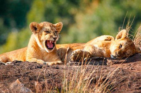 Sydafrika: 1 uges safari med helpension .  Sydafrika: Temba Safari - 7 overnatninger med delt dobbelt værelse - Helpension under hele opholdet - Jeep og ATV til fri benyttelse - Fri adgang til udendørs svømmepøl