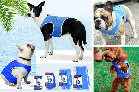 From £5.99  for a cooling dog vest from Domo Secret - choose from four sizes!
