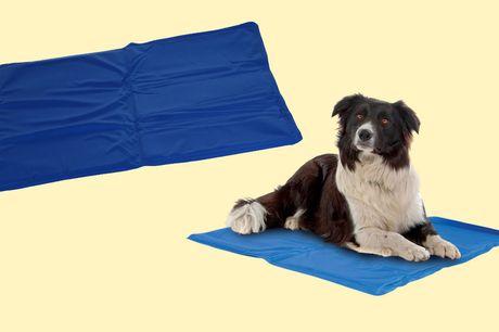 Koelmat voor huisdieren 60 x 80 cm<br /> Voor een koel en verfrissend effect<br /> Water- en vuil afstotend