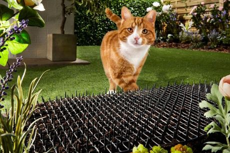 £8.99 instead of £34.99 for a Pest XT Cat Scat Mat  from Thompson and Morgan - save up to 74%