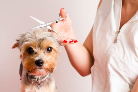 £14 for an online dog grooming diploma from New Skills Academy