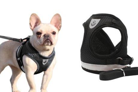 Arnés anti-tirón para mascotas