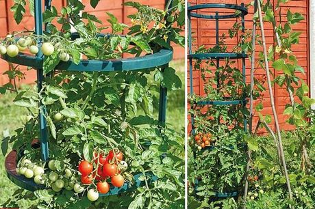 From £10.99 for a Tomato Growing Support 5 Piece Set - 1 or 3 Pack! from Thompson and Morgan - save up to 56%