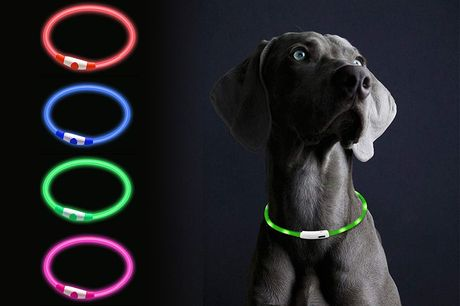 £7.99 instead of £29.99 for a luminous dog collar or £11.99 for two collars from Pinkpree - save up to 73%