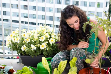 £5 for an accredited growing food in small gardens course from International Open Academy