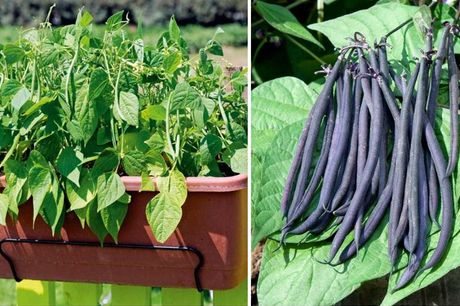 £6.99 instead of £12.99 for a Vegetable Plants - 10 Types! from Suttons Consumer Products Ltd - save 46%