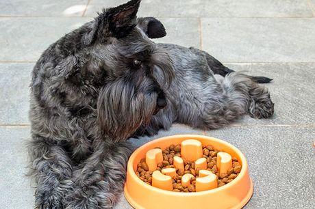 Spis langsomt-madskål til kæledyr. En original madskål, som får kæledyr til at spise langsomt, og som kan hjælpe dem med at forbedre deres spisevaner, hvilket fremmer en langsommere og sundere fordøjelse   Designet tager kampen op mod grovæderi, da dyren