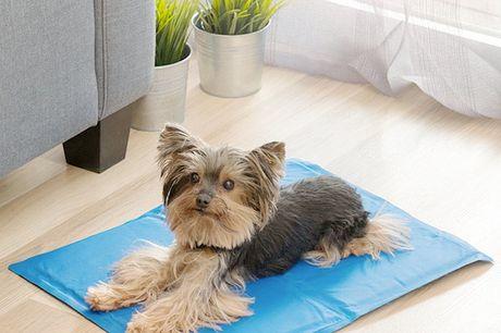 Afkølende måtte til kæledyr (40 x 50 cm). Den er perfekt til at hjælpe kæledyrene, så de kan holde den sommerens varme ud og den hjælper med at regulere deres kropstemperatur   Når de sidder på den, vil dyret have en behagelig, frisk fornemmelse i kroppe