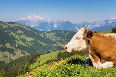 6 dagen Tirol in Oostenrijk Kom 6 dagen genieten in het Oostenrijkse dorpje Brixen im Thale. Verblijf in een 1-of 2-kamer appartement in appartement Brixnerwirt in Tirol en geniet van het uitzicht!