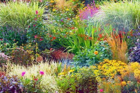 £9.99 for five seasonal perennial border plants in 9cm pots, £19.99 for 10 border plants, £29.99 for 15 border plants from Thompson & Morgan
