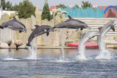 Dagje Dolfinarium - Harderwijk Last minute uitje voor de herfstvakantie!<br /> Dolfijnen, walrussen, zeeleeuwen & meer<br /> Wees er snel bij, OP=OP!