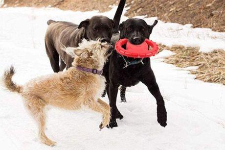 1 o 2 frisbee para perros con envío gratuito