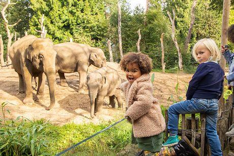 Ontdek DierenPark Amersfoort Dé dierentuin voor kinderen!<br /> Geldig t/m 31 december 2021<br /> Kinderen t/m 2 jaar gratis toegang