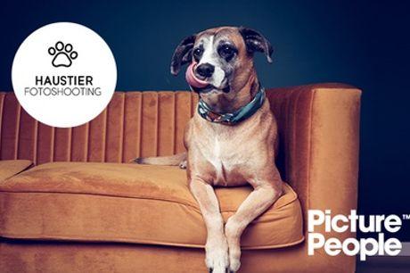 Haustier-Fotoshooting inklusive 2 bis 4 Bildern als Datei und Ausdruck bei PicturePeople (bis zu 75% sparen*)