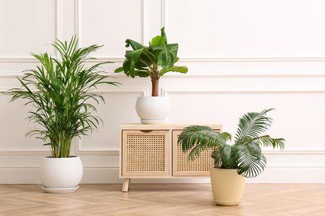 Set van 3 luchtzuiverende planten Voeg extra sfeer toe aan jouw kamer!<br /> Planten met een luchtzuiverende werking<br /> Makkelijk te verzorgen