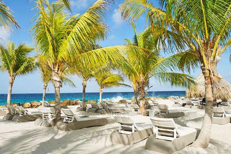 4-sterrenresort op zonnig Curaçao De enige échte bestseller!<br /> Aan het luxe Jan Thiel strand <br /> Upgrade naar half pension mogelijk