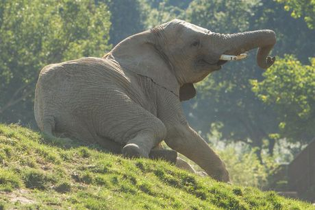 From £29 for entry to The Aspinall Foundation animal park with an animal adoption pack, or from £49 for entry for two – head to Port Lympne save up to 39%