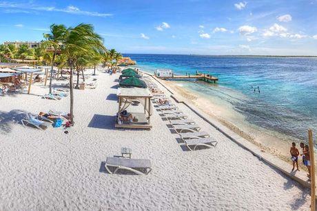 9 dagen all inclusive Bonaire Zin in zon, zee en strand? Boek jouw trip naar Bonaire en geniet van een 9 daagse all-inclusive vakantie in 4-sterrenhotel. En wie weet spot jij dolfijnen vanaf het strand!